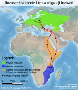 Galeria map - Rozprzestrzenienie i trasa migracji łozówki
