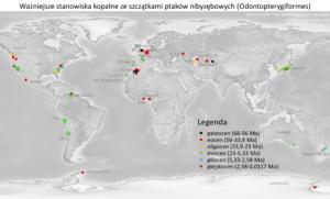 Galeria map - stanowiska kopalne ze szczątkami ptaków