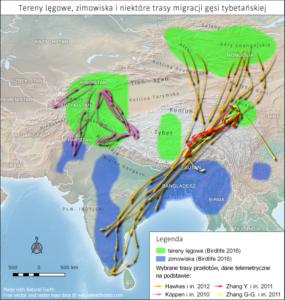 mapa terenów lęgowych, zimowisk i niektórych szlaków migracji gęsi tybetańskiej